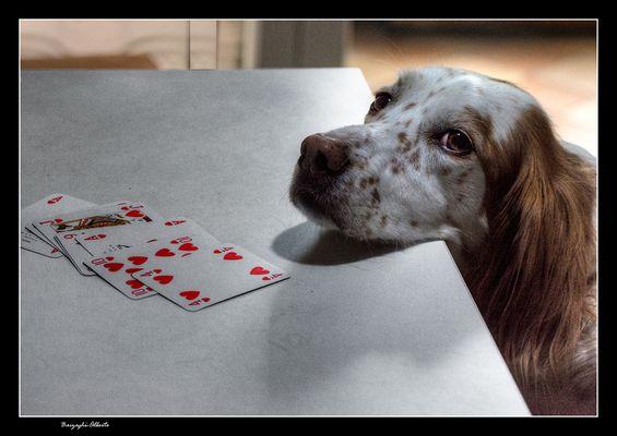 Lola-- hai perso