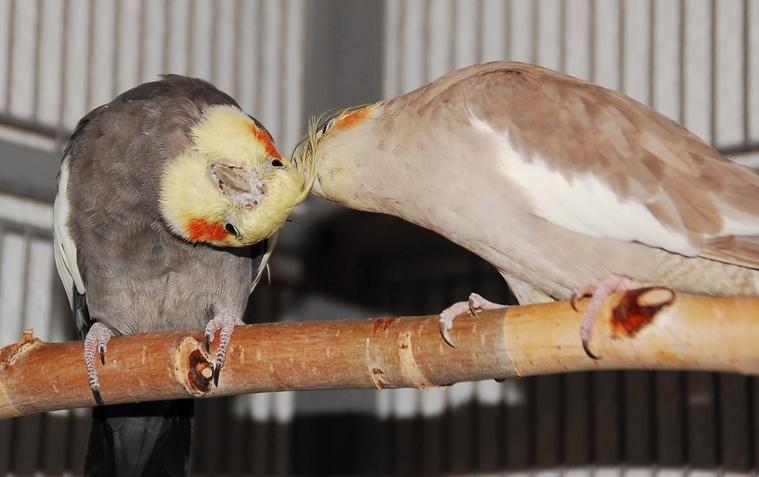 Lola und Bobby