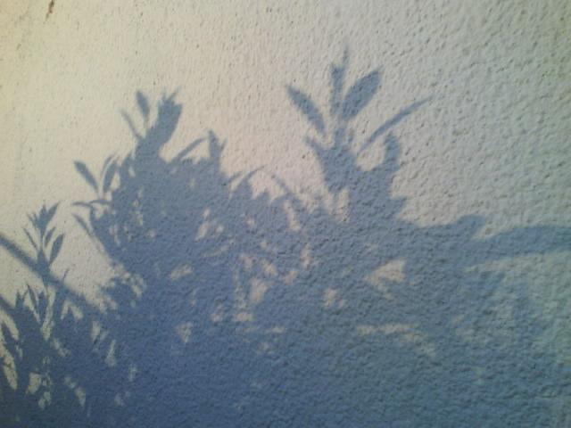 l'ombre de la nature