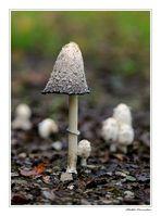 ..l'ombrellino del bosco!!!...