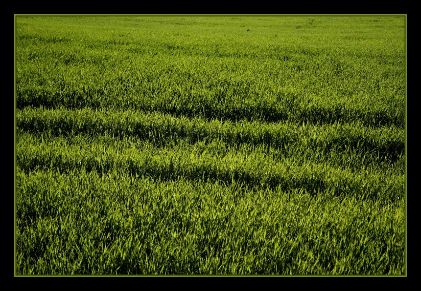 L'onda verde