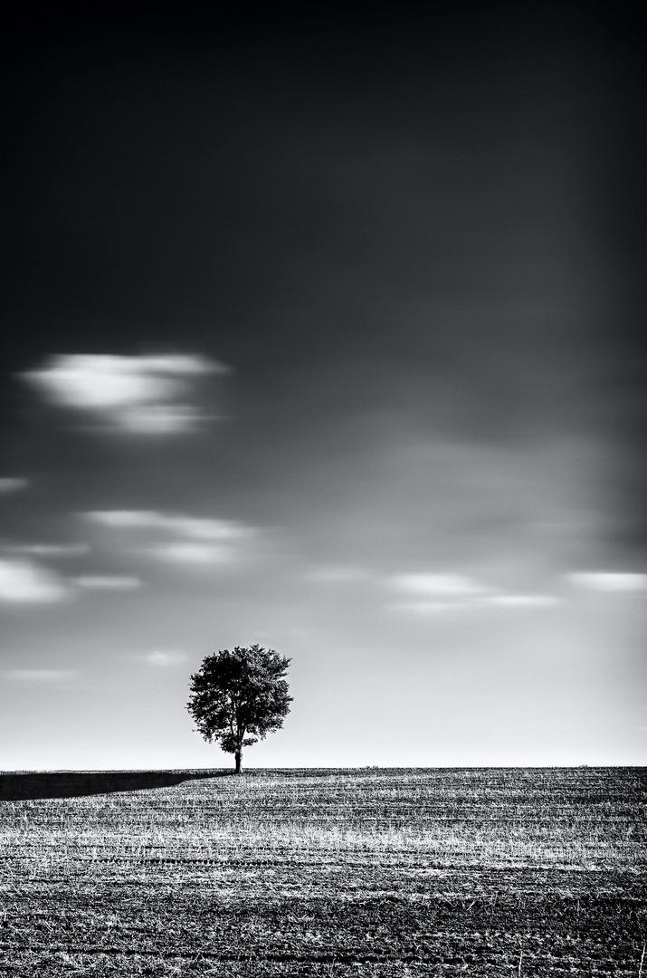 loneliness II