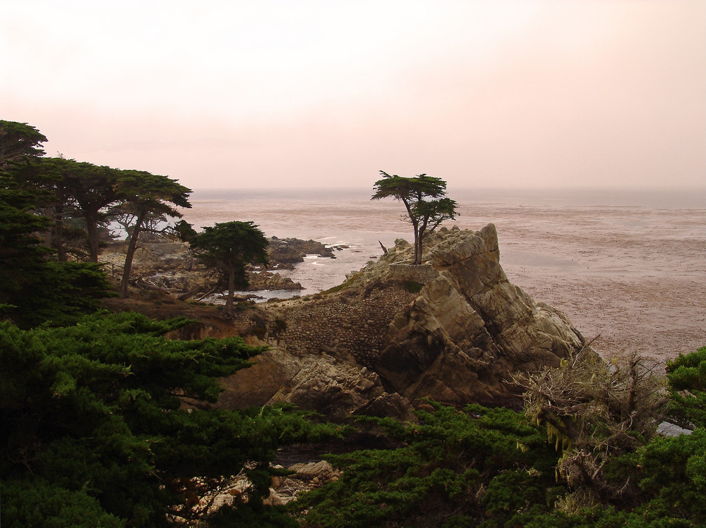 Lonely Cypress - 17 Mile Drive