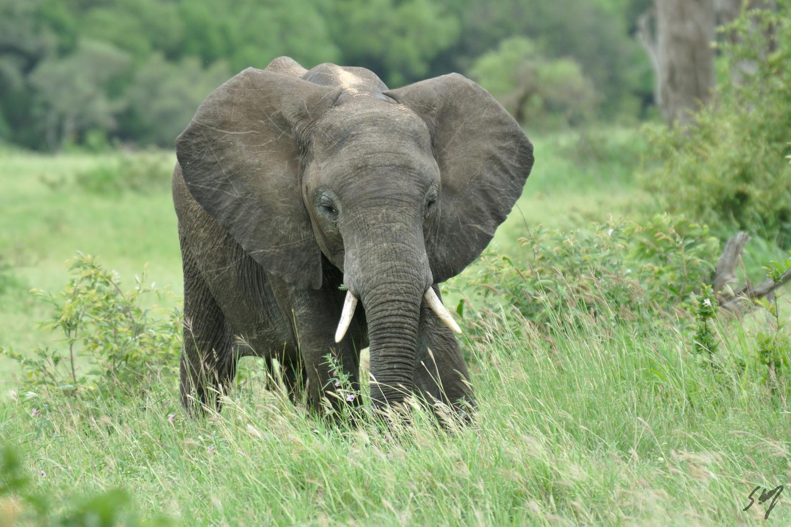 Lonely Elefant