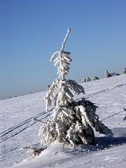 lonely frostie tree