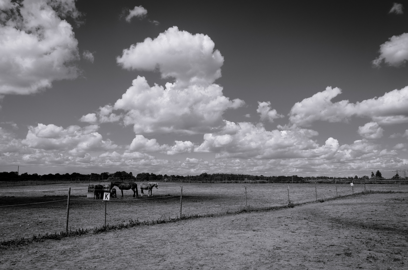 Lonely Horses
