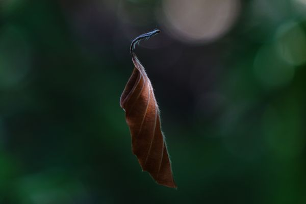 ... lonely leaf ...