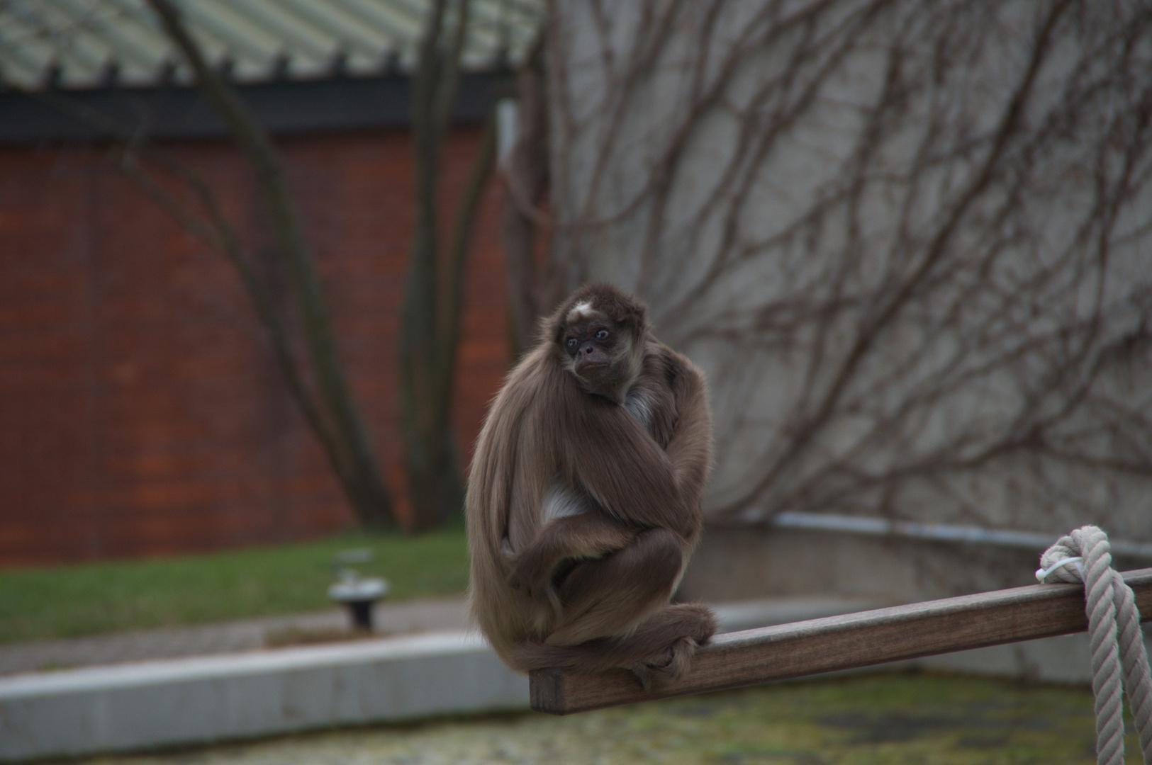 lonely monkey