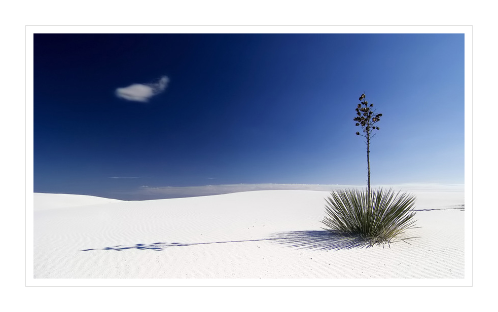 ......lonely palms...........