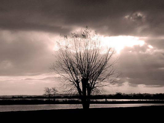 Lonely tree and the ray of light