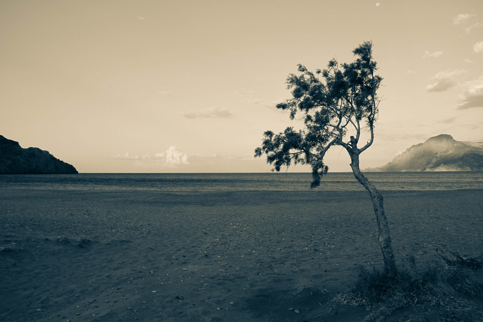 Lonely Tree by the Sea