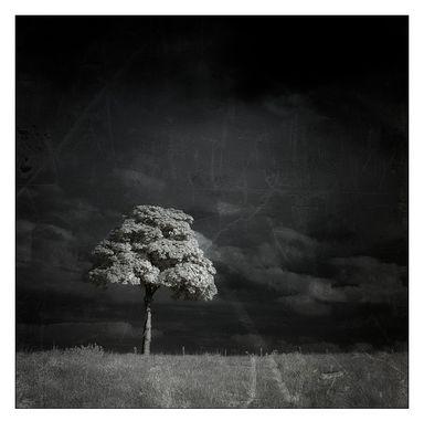. lonely tree [IR] .