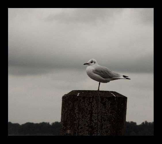lonesome.....