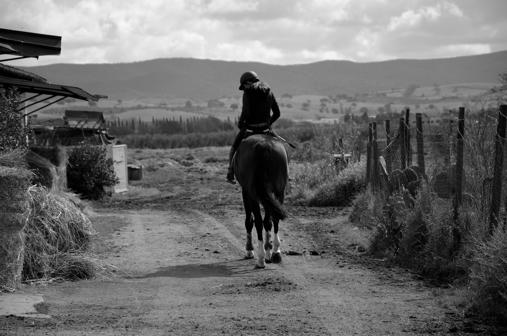 Lonesome Cowgirl