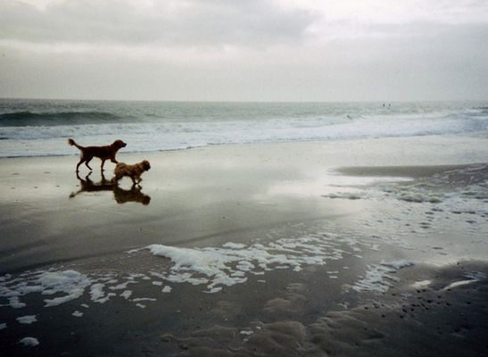 lonesome Dogs
