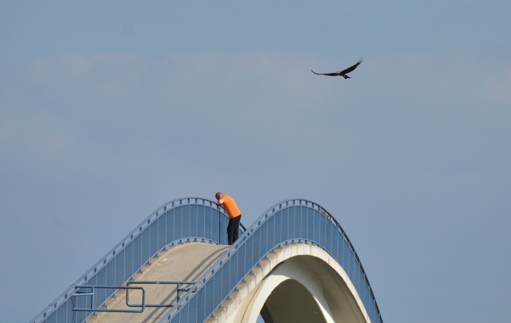 lonesome spotter