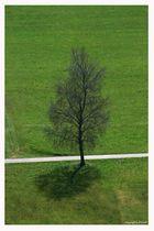 """Lonesome Tree"""
