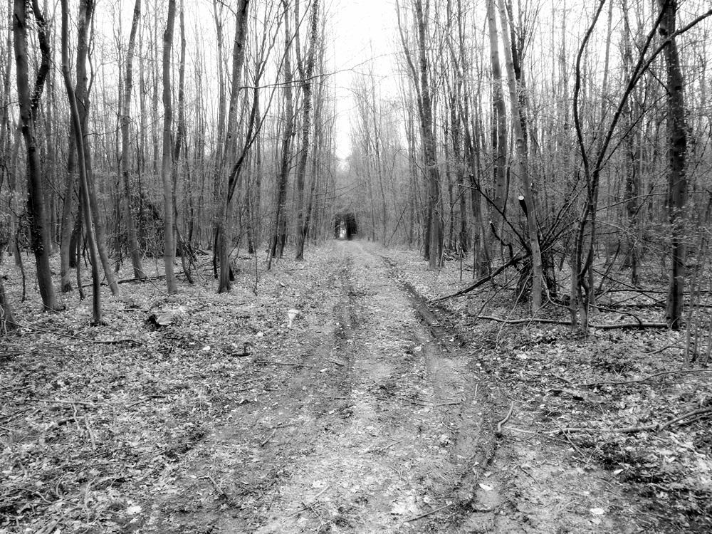 Long Dark way