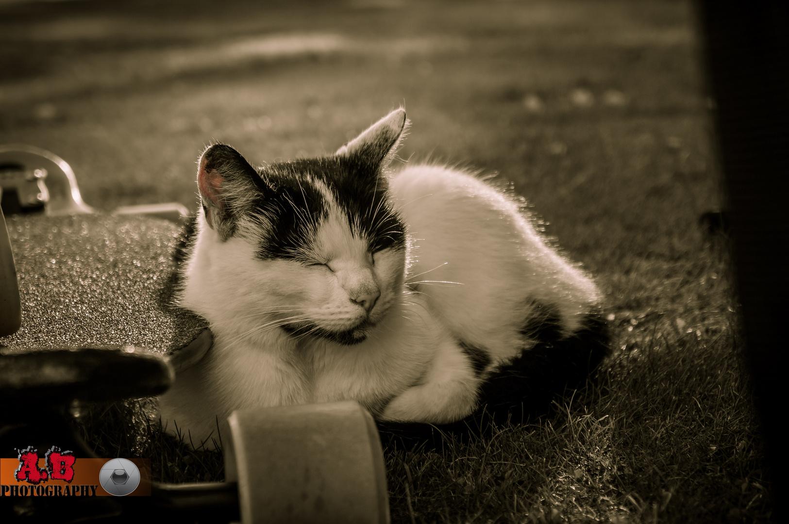 Longboardcat
