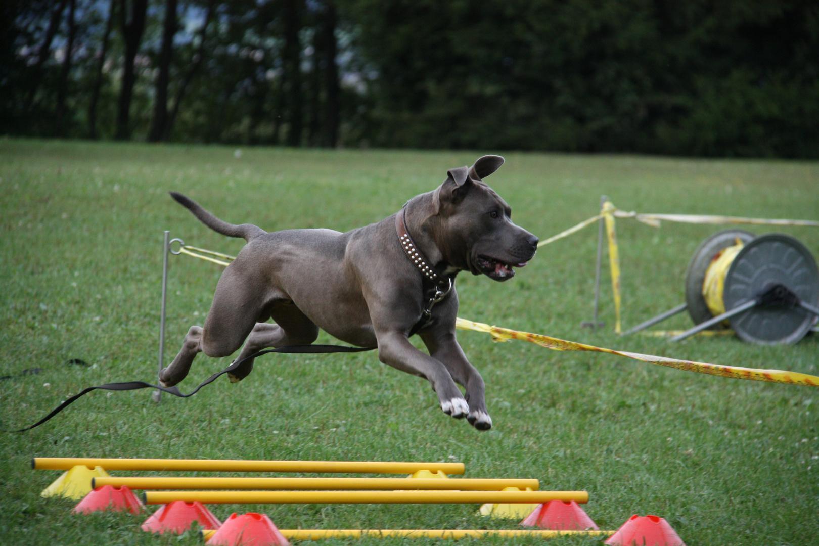 Longieren für Hunde