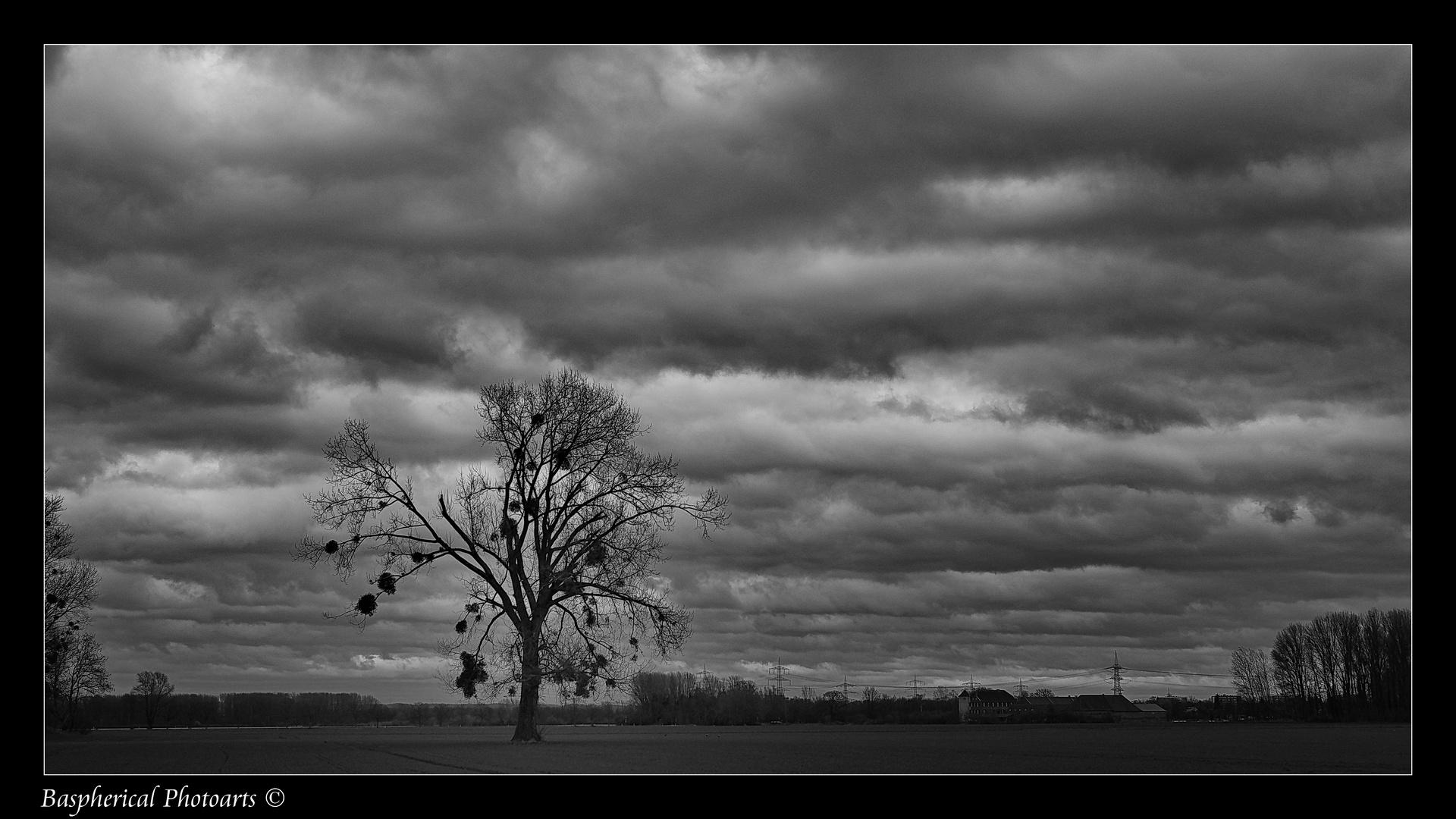 Lonley Tree II