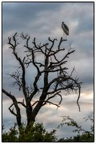 LookOutMarabu - Südafrika