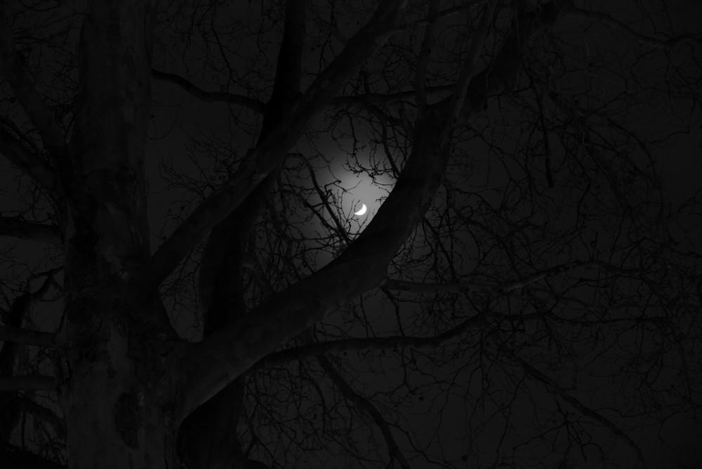 Loom of the dark