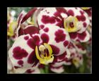 l'orchidée 2