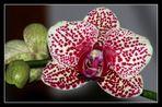 """"""" L'orchidée """""""