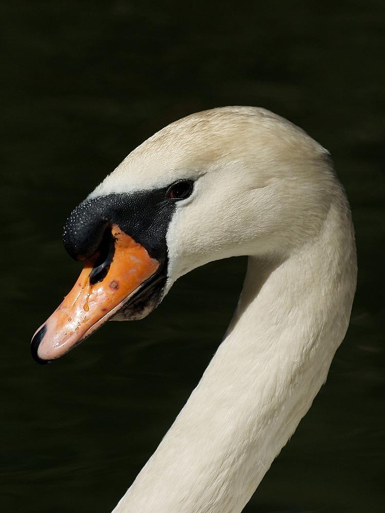 Lord Swan