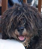 Loriot - Der sprechende Hund