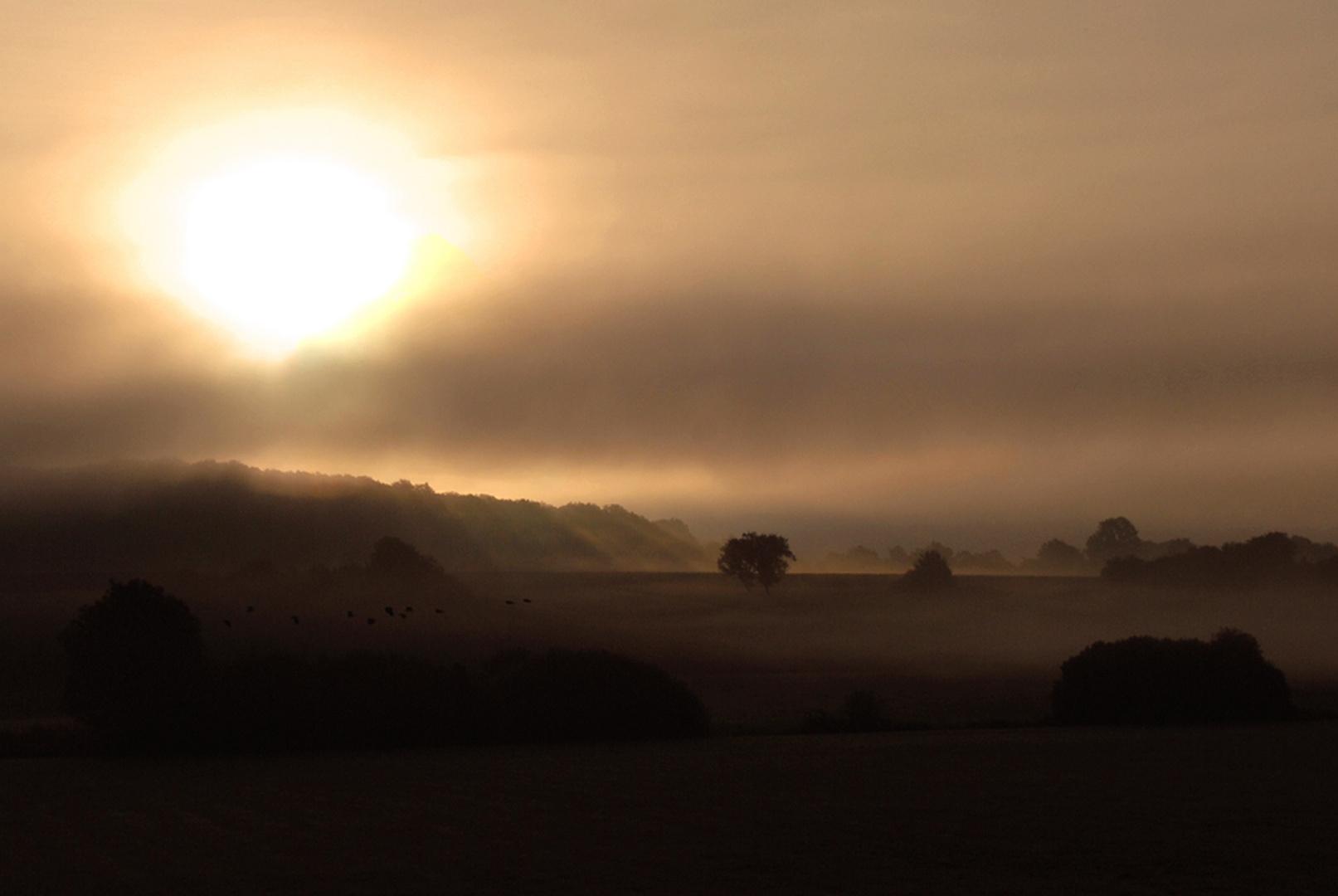 lorsque la lumière rencontre le brouillard