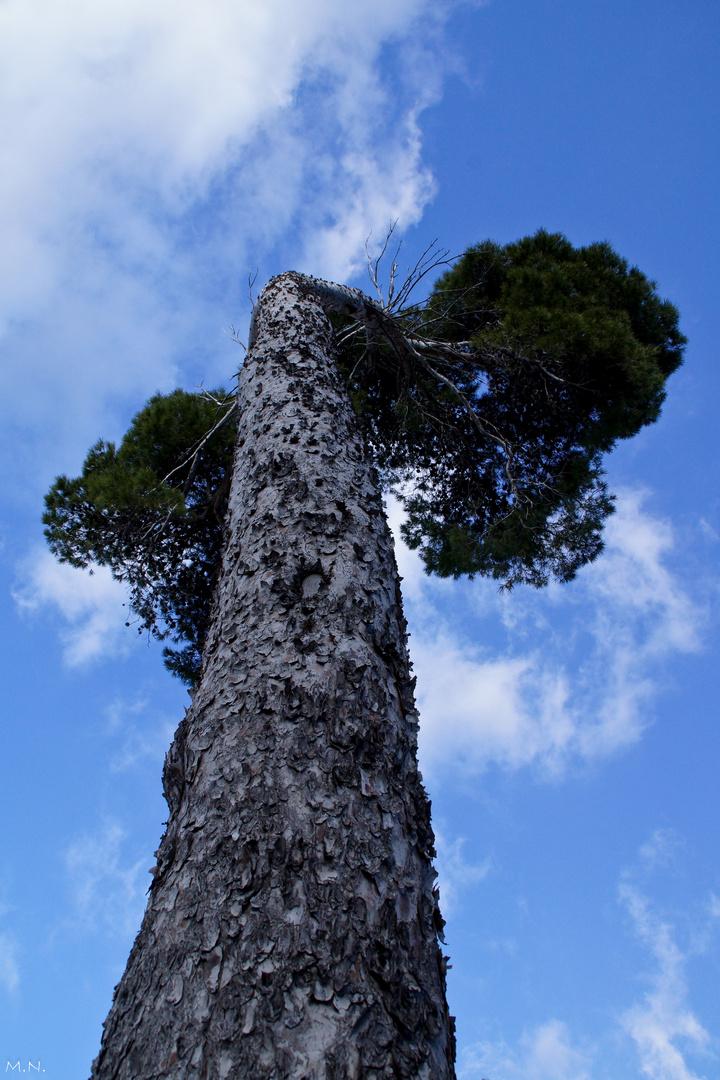Los árboles de Mallorca I