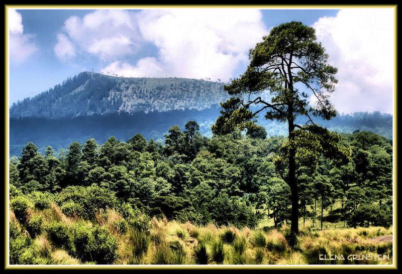 Los bosques de Huitzilac