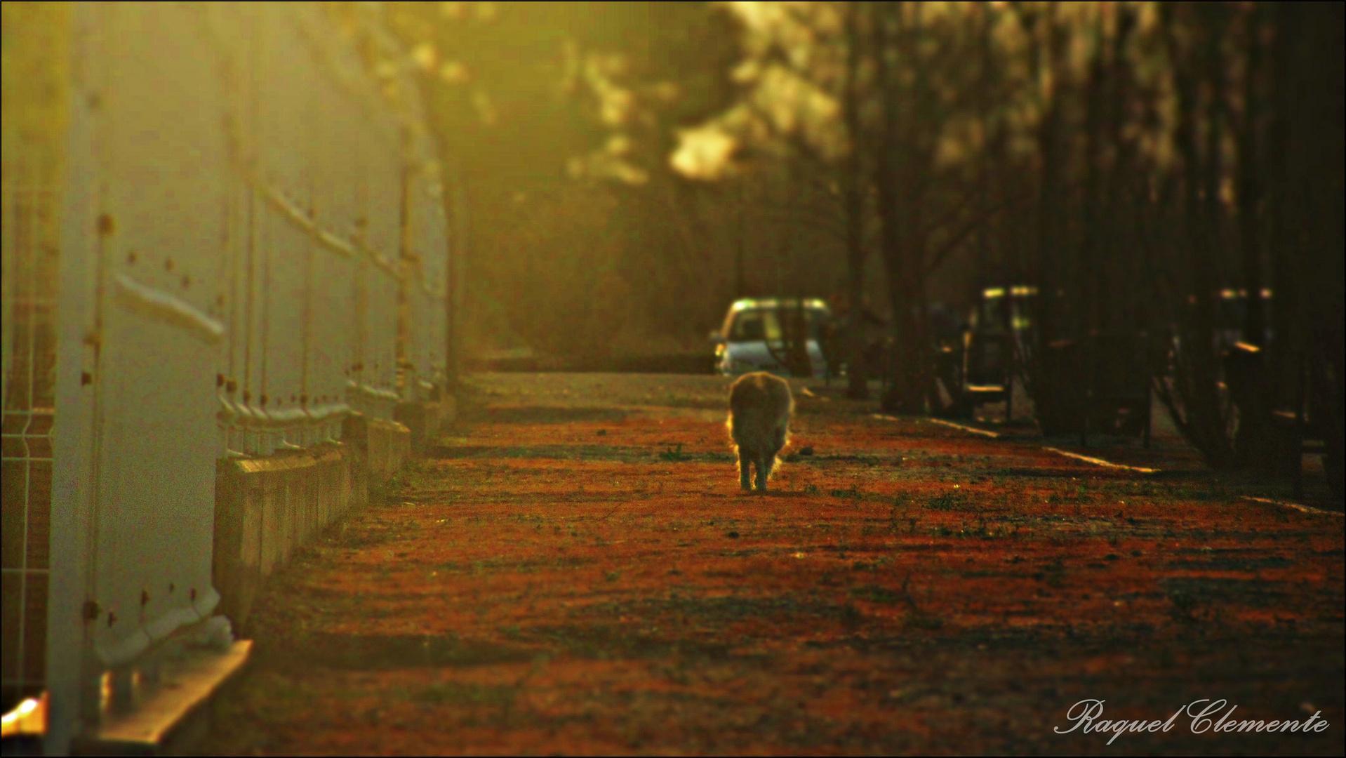 Los buenos recuerdos nos hacen llorar, cuando todo a acabado...