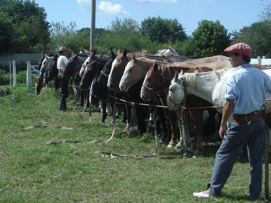 los caballos esperan