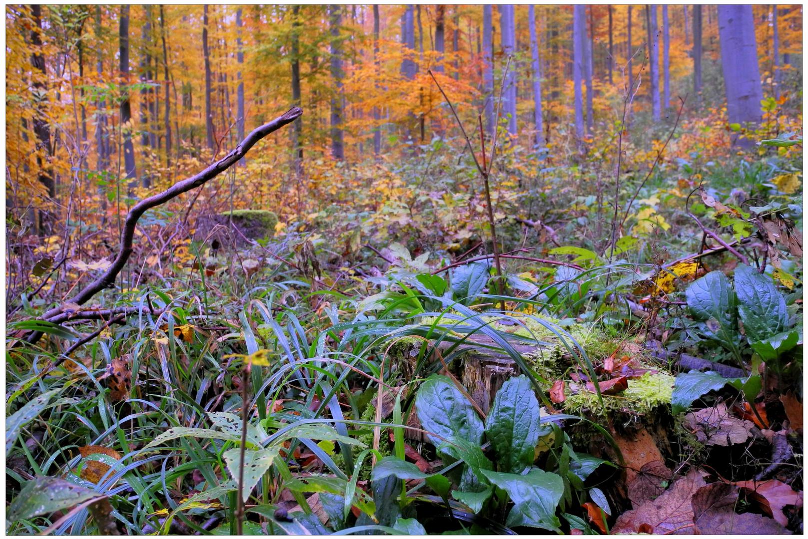 Los colores del otoño VII, bosque