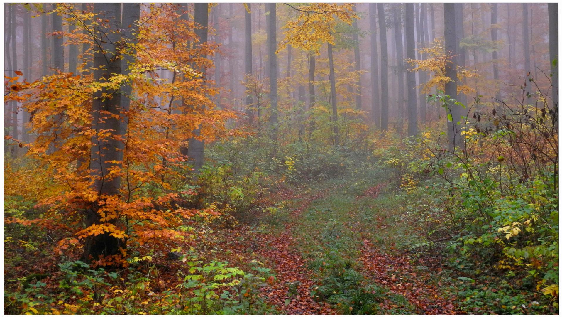 Los colores del otoño XIV, en bosque