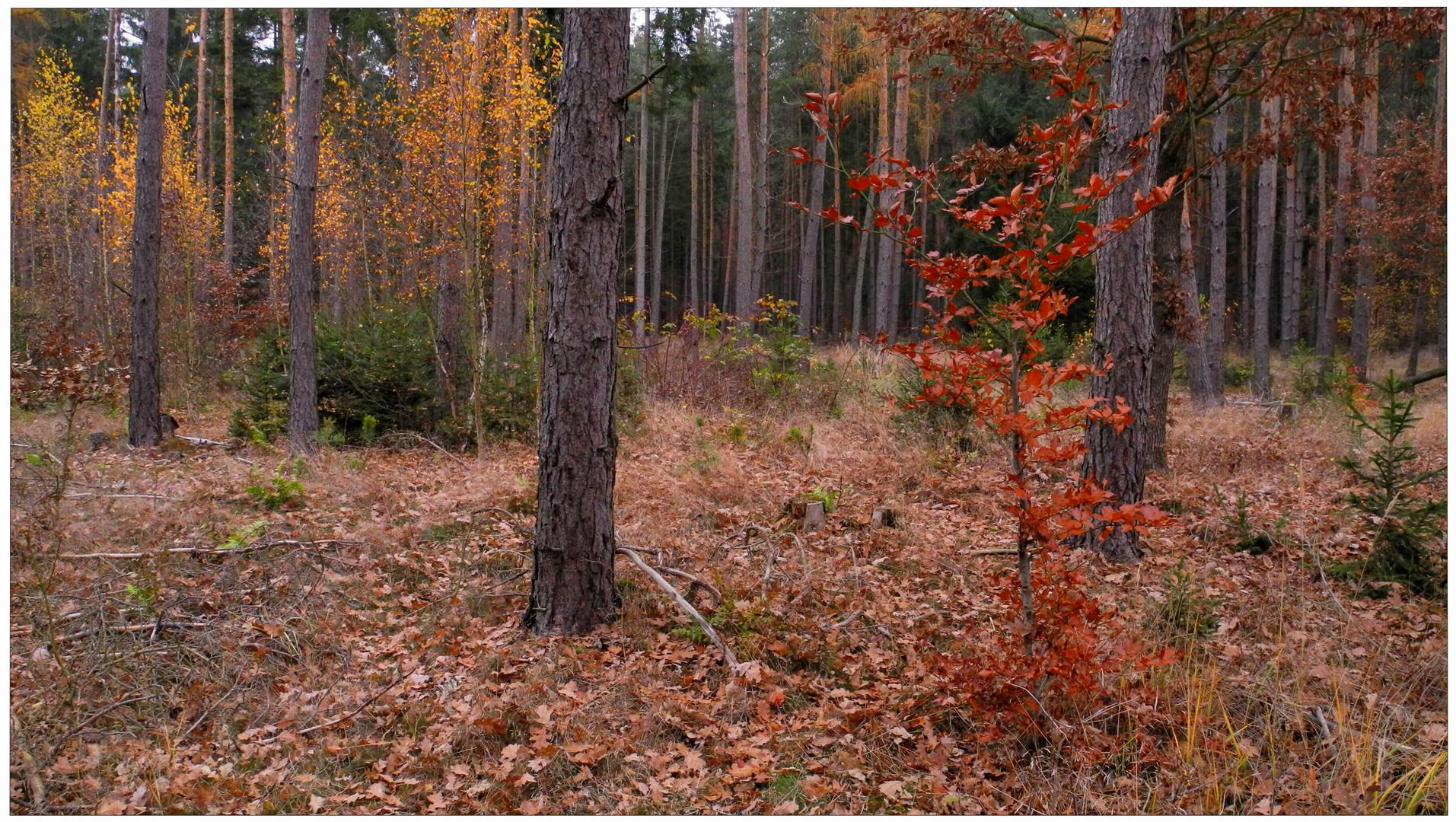 Los colores intensivos del noviembre III