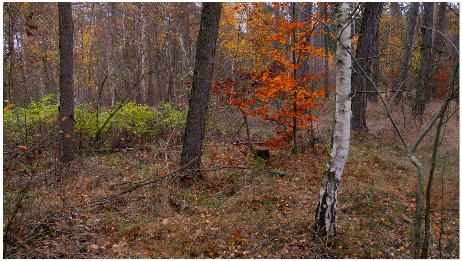 Los colores intensivos del noviembre V