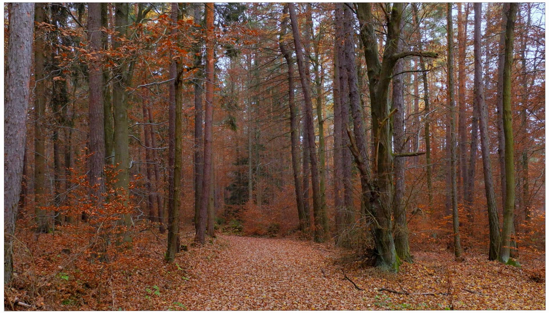 Los colores intensivos del noviembreIV