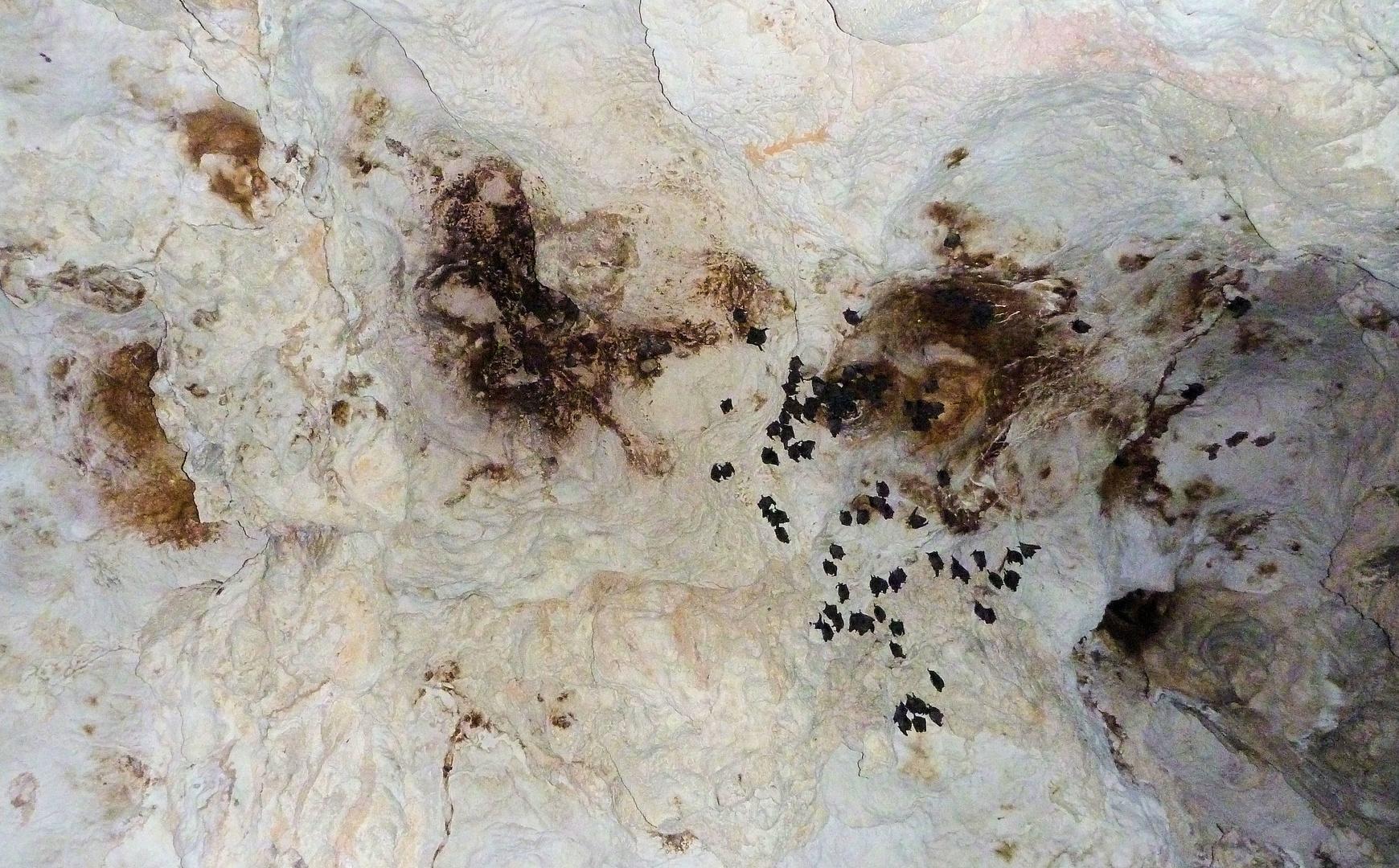 Los Haitises Nationalpark in einer Höhle