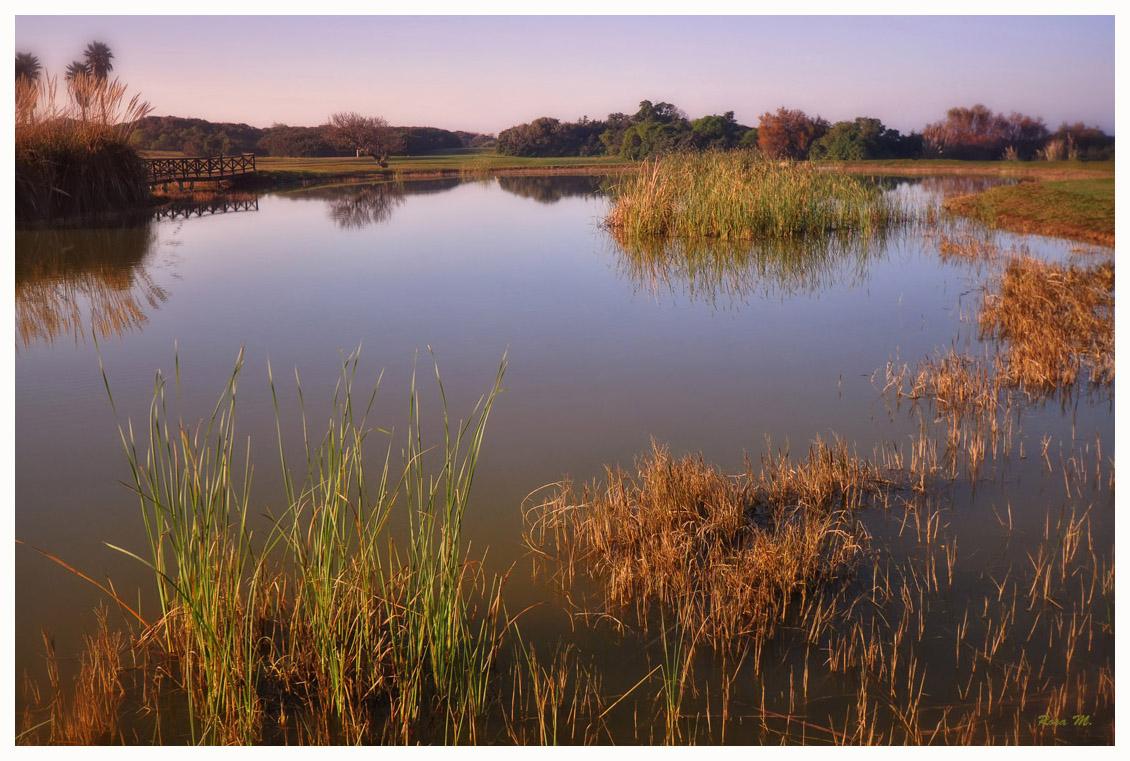 Los juncos del lago