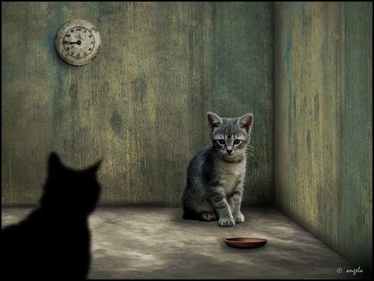 Los miedos del gato