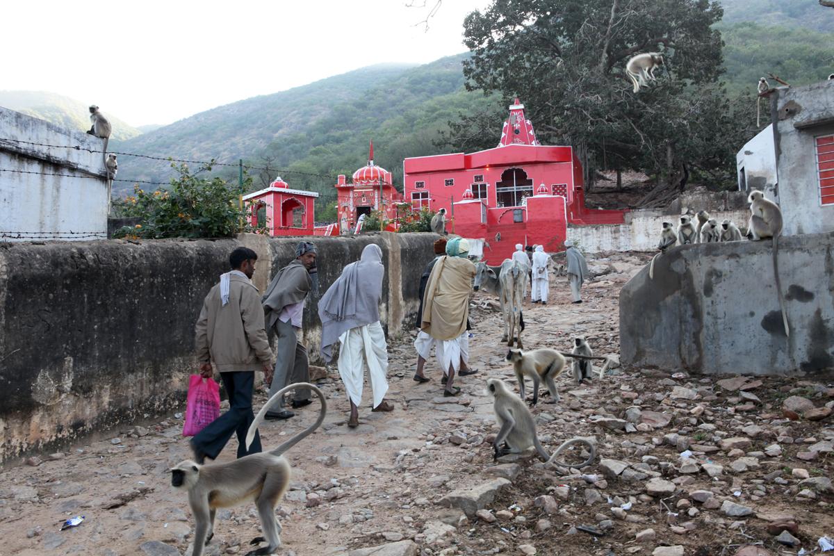 Los peregrinos y los animales en la India