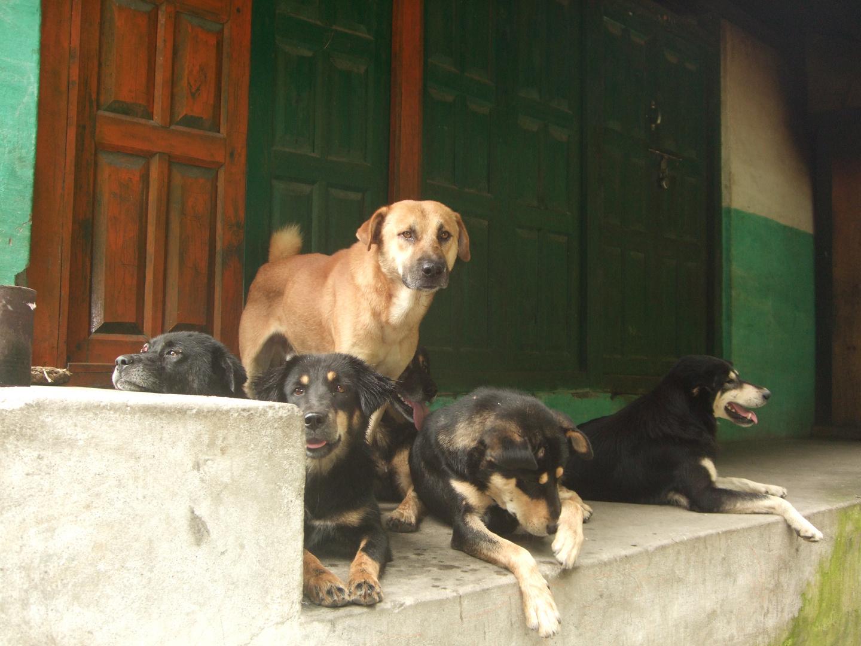 Los Perros del Himalaya