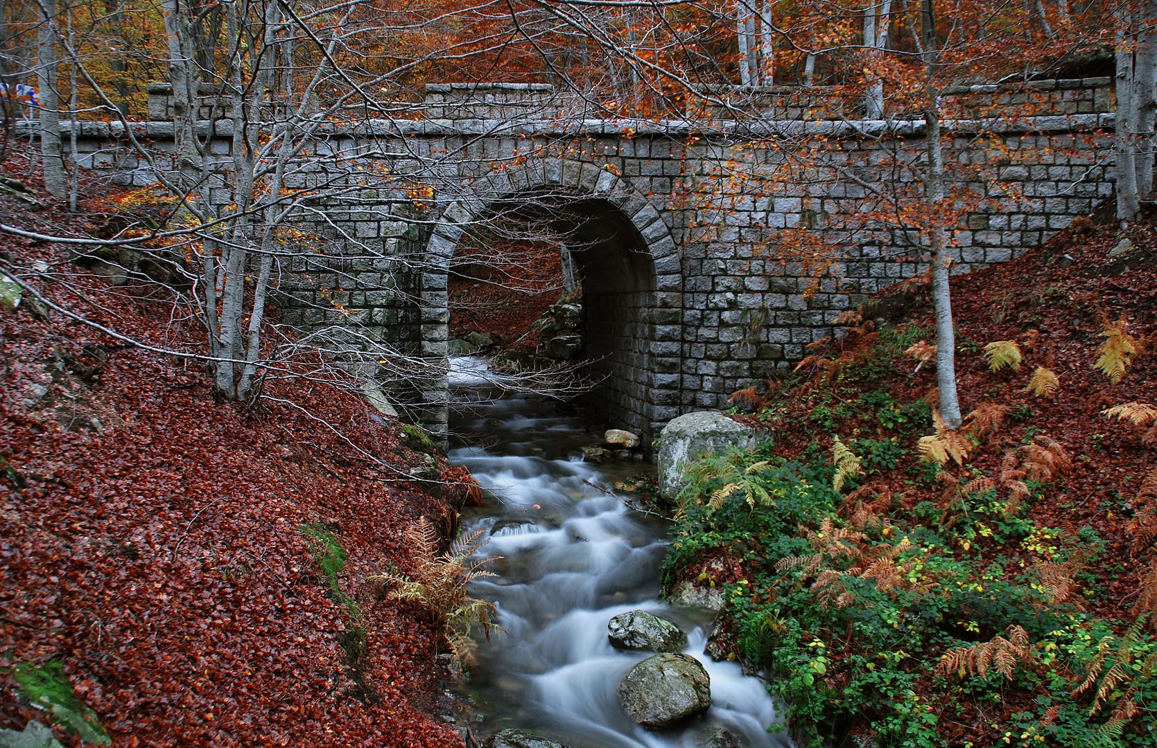 Los puentes unen