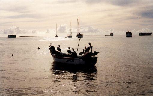 Los Roques - Pelikane