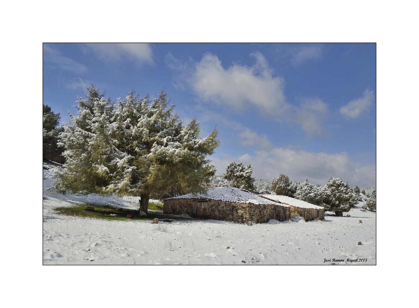 Los sabinares nevados. 2