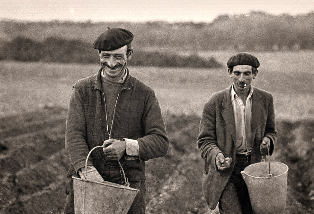Los sembradores de patatas